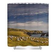 Sheep Grazing In Headland Shower Curtain