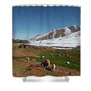 Sheep In The Atlas Mountains 02 Shower Curtain