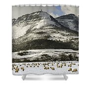 Sheep In The Snow Shower Curtain