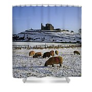 Sheep On A Snow Covered Landscape In Shower Curtain
