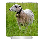 Sheep With A Bell Shower Curtain