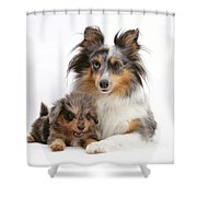Sheepdog With Puppy Shower Curtain