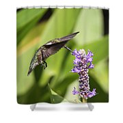 Sheer Beauty Shower Curtain