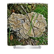 Shelf Fungus - Grifola Frondosa Shower Curtain