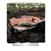 Shelf Mushrooms Shower Curtain