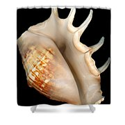 Shell - Conchology - Conch Shower Curtain