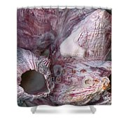 Shell - Conchology - Volcano Island Shower Curtain