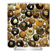 Shell Background Shower Curtain