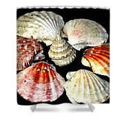 Shell Flower Shower Curtain