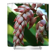 Shell Ginger Alpinia Zerumbet Tropical Flowers Of Hawaii Shower Curtain