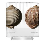 Shell Line Systems Shower Curtain