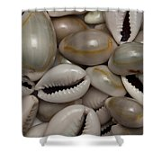 Shell Sigay 1 Shower Curtain