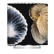 Shell X-ray Shower Curtain