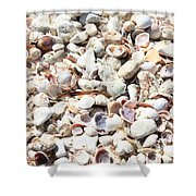 Shells Shower Curtain