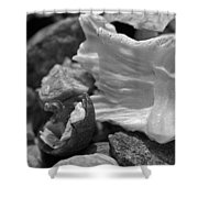 Shells Vi Shower Curtain