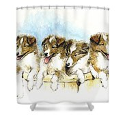 Sheltie Pups Shower Curtain