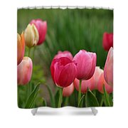Sherbert Color Tulips Shower Curtain