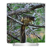 Shermans Fox Squirrel Shower Curtain
