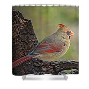 Shes An Early Bird  New Version Shower Curtain