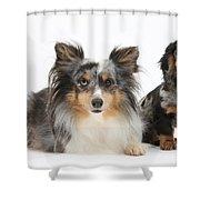 Shetland Sheepdog And Dachshund Shower Curtain
