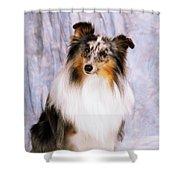 Shetland Sheepdog Portrait Of A Dog Shower Curtain