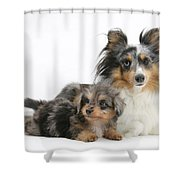 Shetland Sheepdog With Pup Shower Curtain
