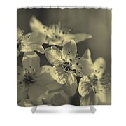 Shimmering Callery Pear Blossoms Shower Curtain