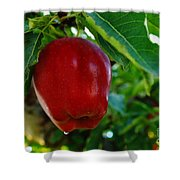 Shiny Red And Ripe  Shower Curtain