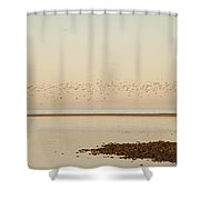 Shore, Alnmouth, Northumberland, England Shower Curtain by John Short