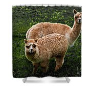 Short And Tall Shower Curtain