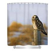 Short-eared Owl, Alberta, Canada Shower Curtain