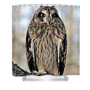 Short-eared Owl Shower Curtain