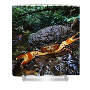 Short-tailed Crab Potamocarcinus Sp Shower Curtain