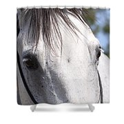 Show Horse At Mule Days Shower Curtain