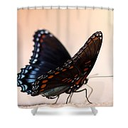 Showing Colors Shower Curtain