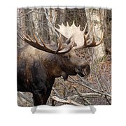 Showing His Rack Shower Curtain