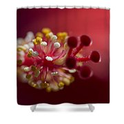 Showy Tropical Vibrant Red Hibiscus Pistil Shower Curtain
