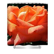 Shreveport Rose Shower Curtain