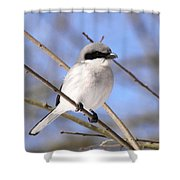 Shrike - Bird - Unique Beak Shower Curtain
