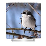 Shrike - Lonely - Missing You Shower Curtain