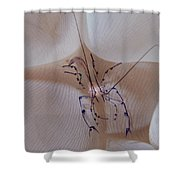 Shrimp In Bubble Coral, Indonesia Shower Curtain
