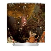 Shrimp With Legs And Claws Spread Wide Shower Curtain