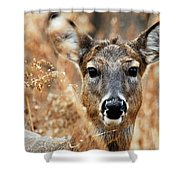 Shy Doe Shower Curtain