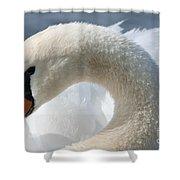 Shy Swan Shower Curtain