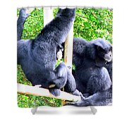 Siamang Gibbons Shower Curtain