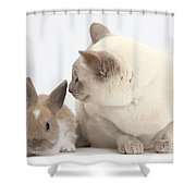 Siamese-cross Cat, Isaac, And Baby Shower Curtain