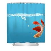 Siamese Fighting Fish Betta Splendens Shower Curtain