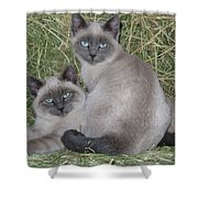 Siamese Haystack Shower Curtain