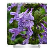 Siberian Catmint Shower Curtain