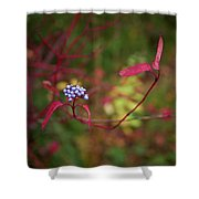 Siberian Dogwood Shower Curtain